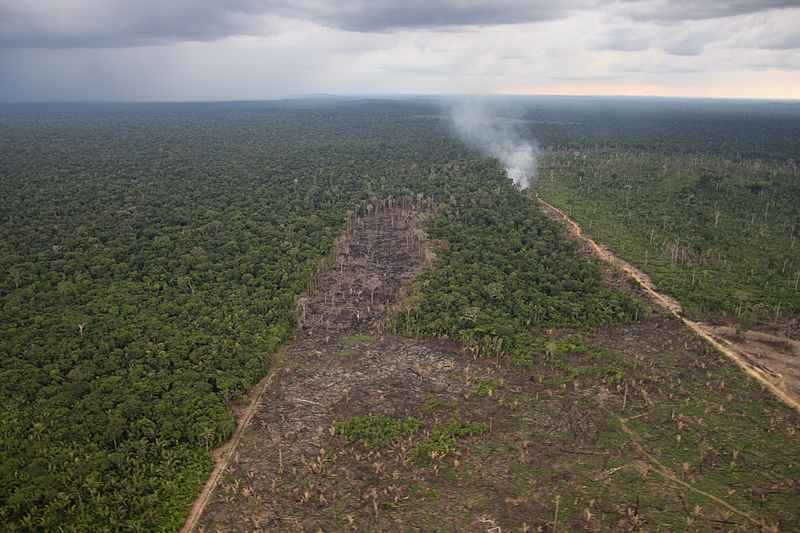 """PL do senador Irajá Abreu (PSD/TO), conhecido como """"campeão do desmatamento"""", beneficia invasores de terras públicas"""