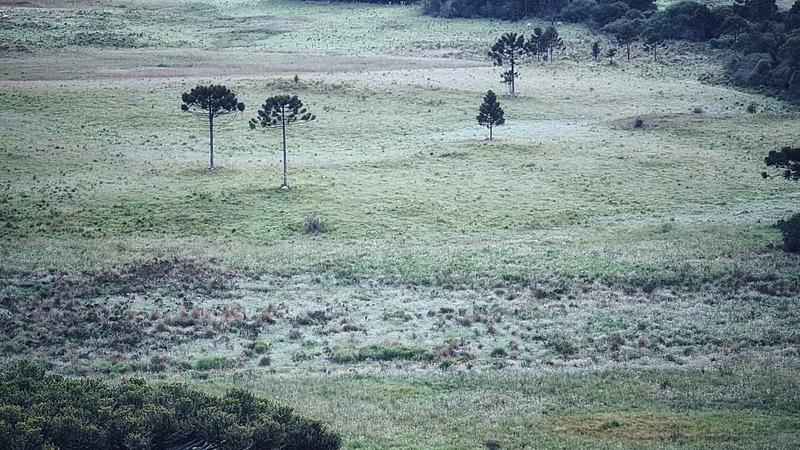 No Rio Grande do Sul, foram registradas perdas em lavouras com a queda de granizo